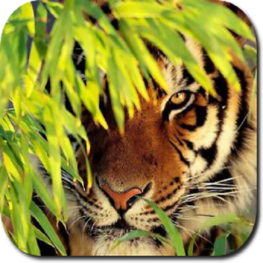 Tiger HD Wallpapers (Free Bible Dictionary Download)