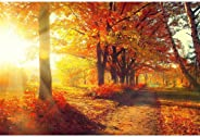 Pitaara Box Autumnal Trees in Sun Rays D4 Canvas Painting MDF Frame 24 X 16Inch