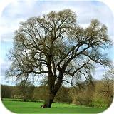 Trees of Britain