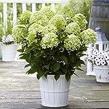 Lunji Outils de Pelle Jardinage Gardena Pelle Bonsai Outils de Jardinage, Couleurs aléatoires