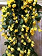 SAMRIDDHI Artificial Hanging Orchid Rose Shaped Flowers (Yellow)