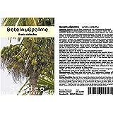 Seedeo® Betelnußpalme (Areca catechu) 3 Samen