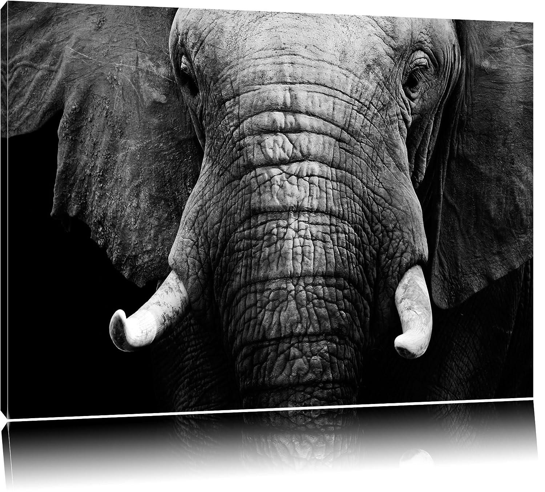 photo elephant noir et blanc great gros plan le tronc lphant boueux dans la conversion en noir. Black Bedroom Furniture Sets. Home Design Ideas