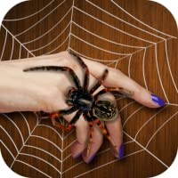 Spider On My Hand