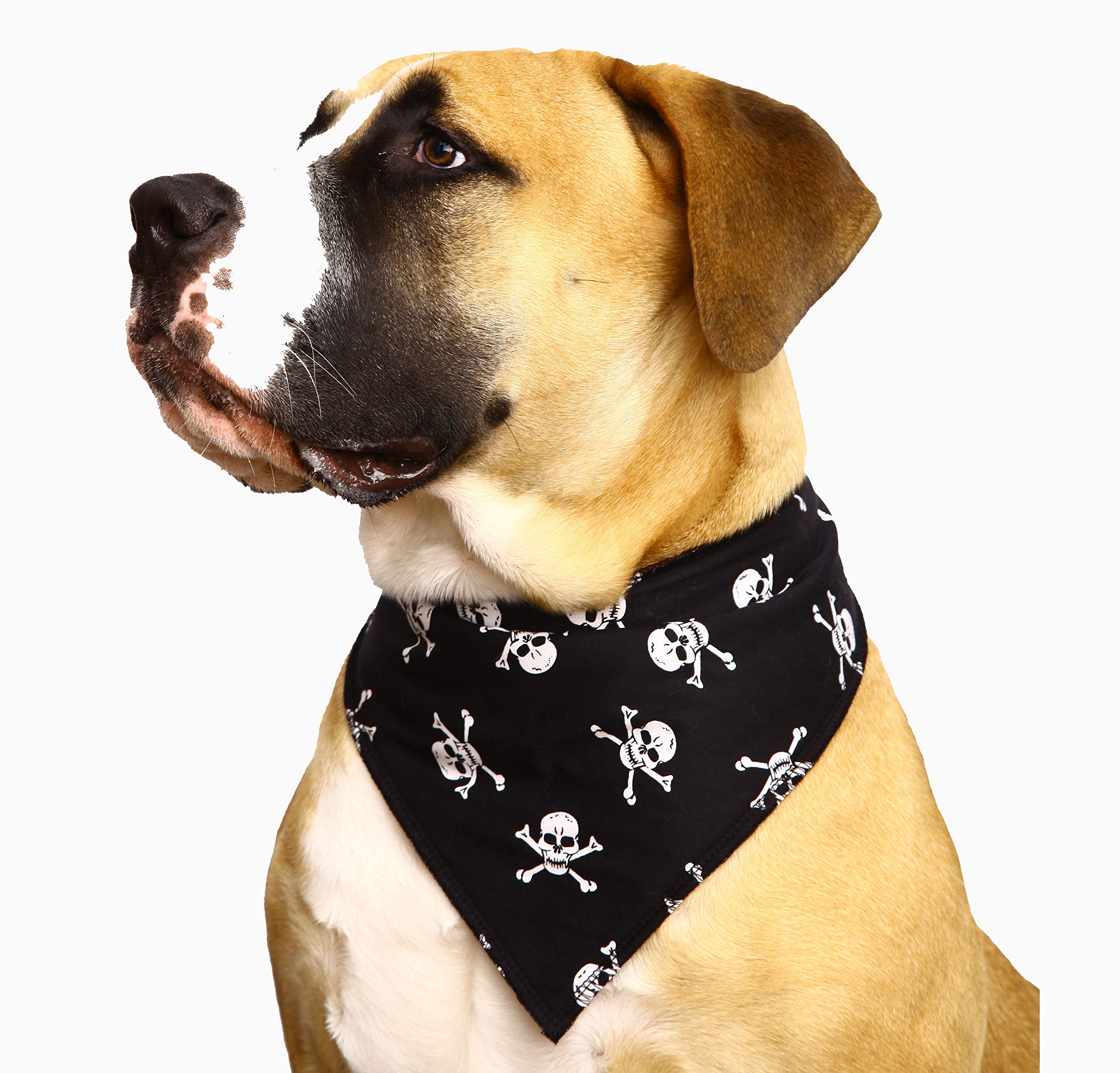 Spoilt Rotten Pet (S4) White Skulls Jolly Roger Bandana. Extra Large Size Generally Fits Rottweilers and St Bernard Sized Dogs. Neck Size 23″ to 28″ Gorgeous Range of Patterns & Colours.