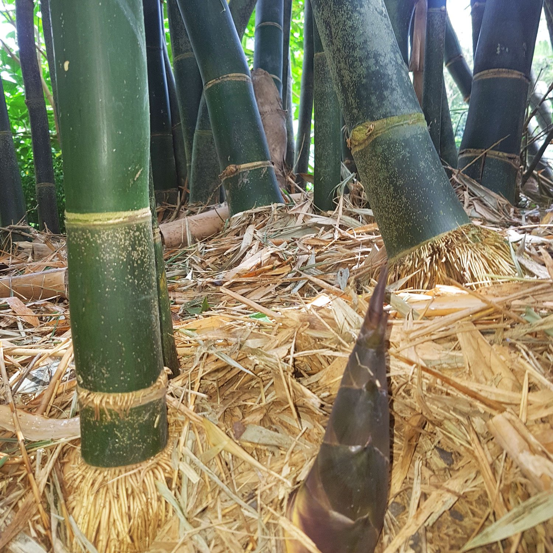 Blue Fox 200g Entfeuchter Aktivkohle Ohne Strom Bambus Kitchen