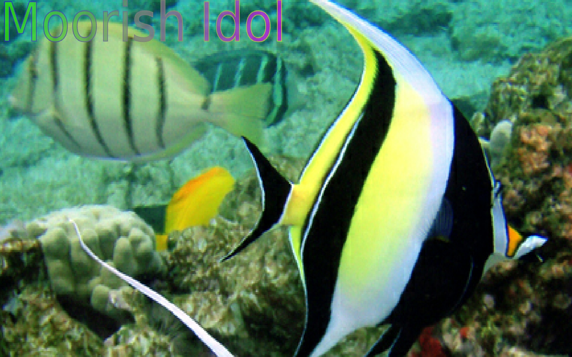 Fish of the coral reef 1 appstore for android for Fish of the amazon