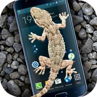 Gecko Sur l'Ecran Blague