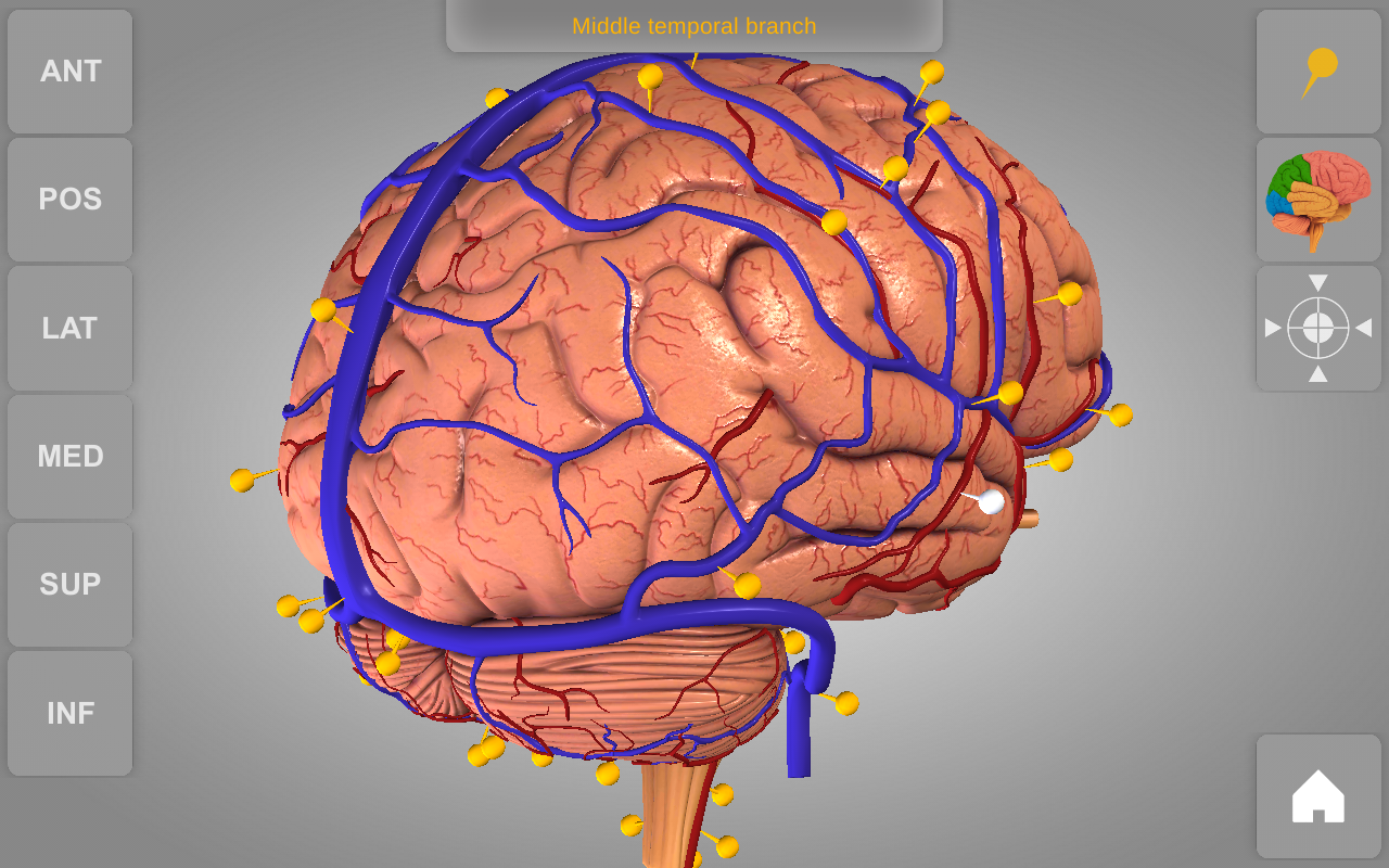 Brain 3d Atlas Of Anatomy Amazon Appstore For Android