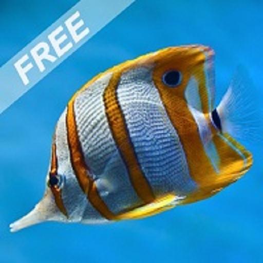 marine-fish-aquarium-free