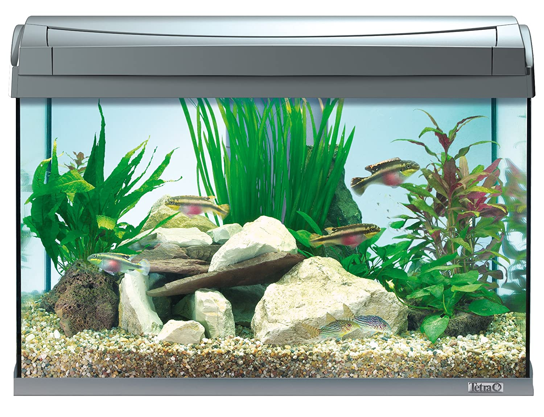 Tetra AquaArt Fish Tank, 60 Litre: Amazon.co.uk: Pet Supplies