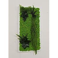 Quadro Vegetale - 60 x 30 cm - Verde 15 - Edera-Felce-Amaranthus-Capelvenere