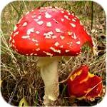Fungi of Britain