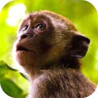 Monkey Sounds
