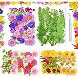 Fleurs Séchées Naturelles 129 Pièces Sirecal Vraies Fleurs Pressées Séchées Feuilles pour Resine Epoxy Scrapbooking Bricolage