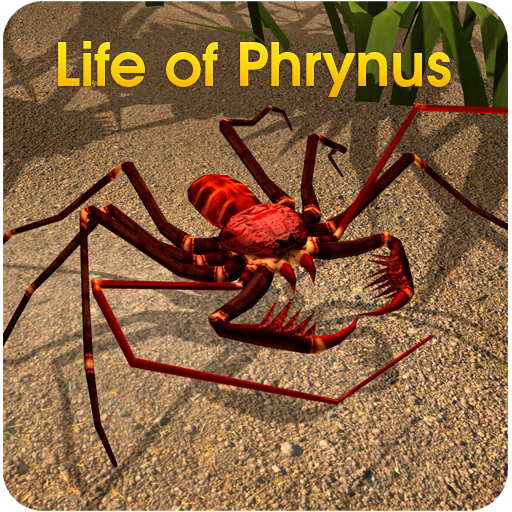 Life of Phrynus - Whip Spider - 3d-software Rhino