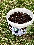 Kompostwürmer Kaufen 250 Stück in Spezialeimer Kompostbeschleuniger Garten Wurmkomposter Wurmkiste Lebend Regenwürmer