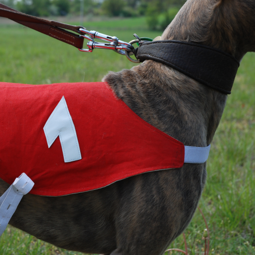 greyhound-racing-news-uk
