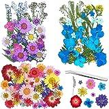Frasheng 120Pcs Fleurs Sechees Naturelles,Vraies Fleurs pressées séchées,Avec une pince à épiler,Fleurs séchées pour Résine,