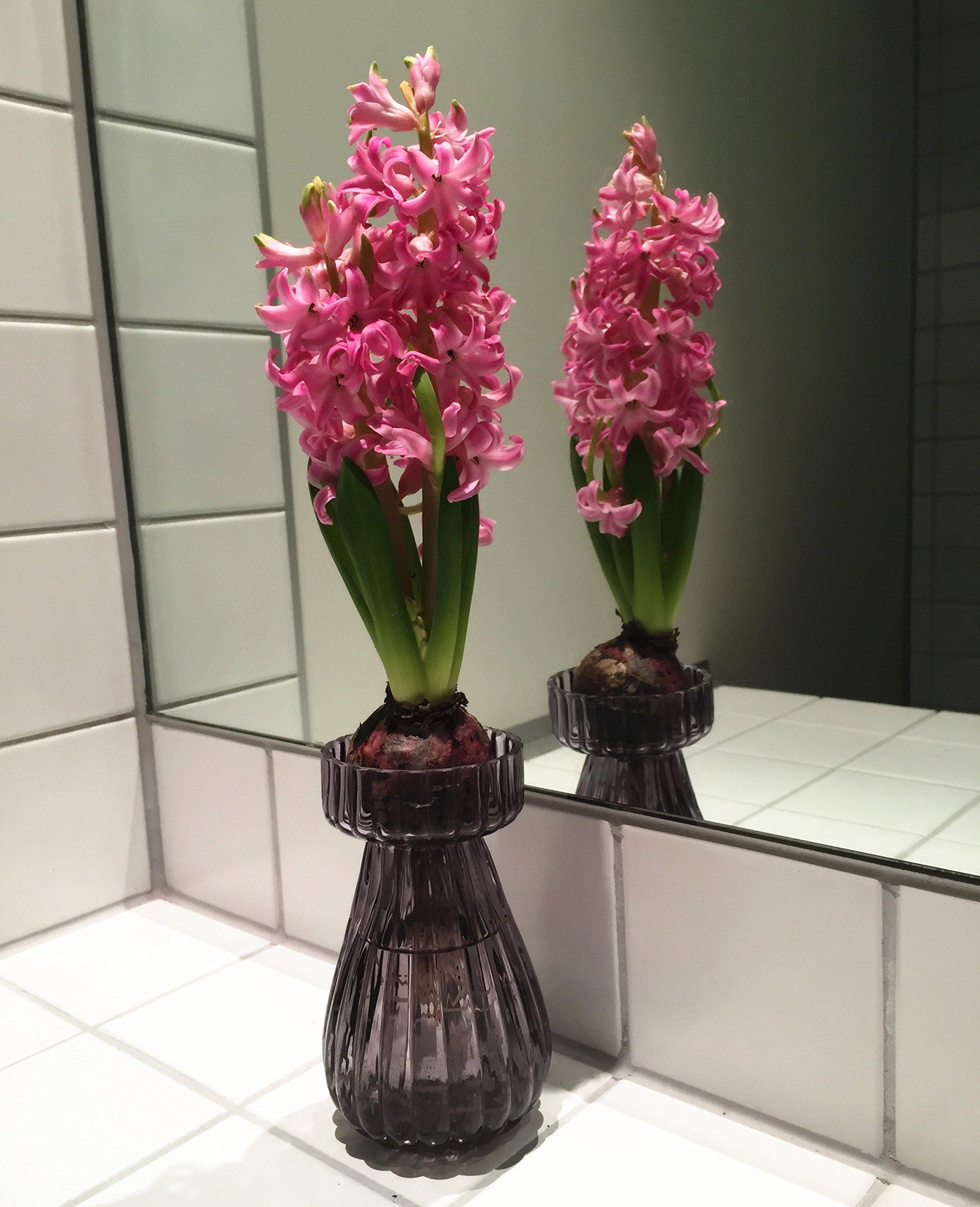 Set de 3 Vasos de Vidrio Jacinto de Vidrio 14 cm Jarrón de Flores Jacintos Jarrón de Mesa Deco Jarrón de Vidrio Viento…