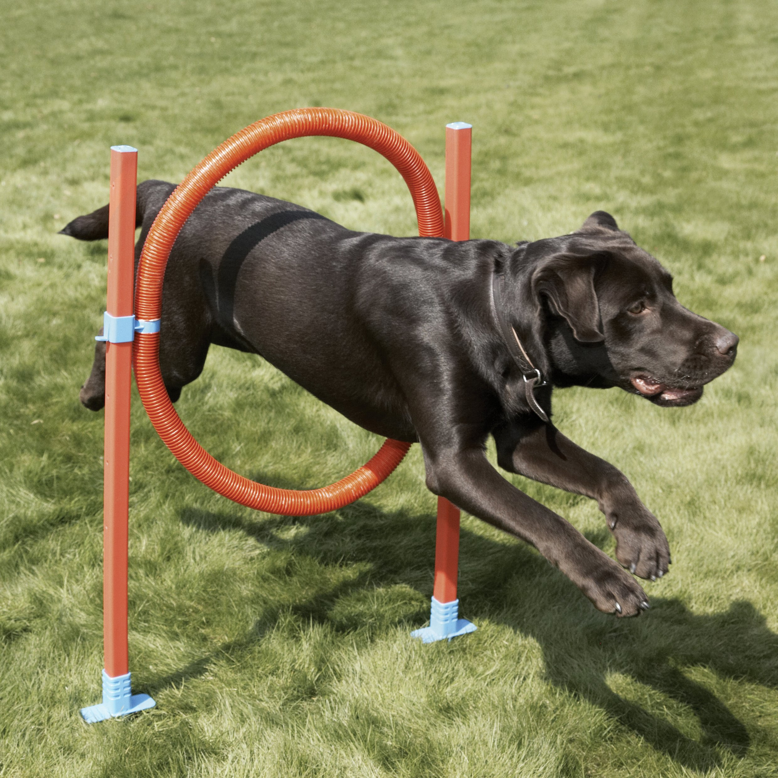 Rosewood Dog Agility Jump includes Bag