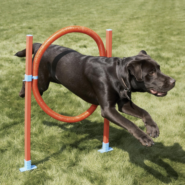 Rosewood Dog Agility Jump includes Bag