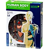 Thames et Kosmos - 260830 - Maquette Anatomie - Corps Humain, Multi - version anglaise
