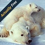 Wilde Tiere der Arktis