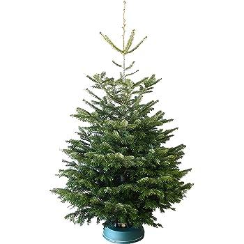 echter weihnachtsbaum nordmanntanne h ca 1 65 1 80 m. Black Bedroom Furniture Sets. Home Design Ideas