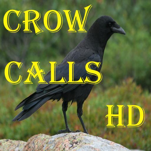 Crow Bird Call (Crow Calls)