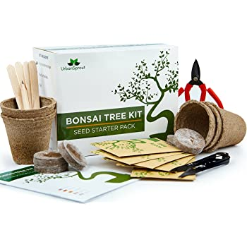 Urban Sprout Bonsai Tree Kit Grow Your Own Bonsai Trees from Seeds - Gardening Gift Set - 5 Bonsai Tree Seeds Species - Germination Starter Kit with Bonsai Tools