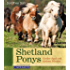 Shetlandponys: Großer Spaß mit kleinen Pferden (Pferderassen)