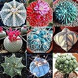 Las semillas de cactus, Cactus 100 piezas Semilla Mini Fácil Cultivando Ligera decorativo Bonsai Semilla para jardinería Idea