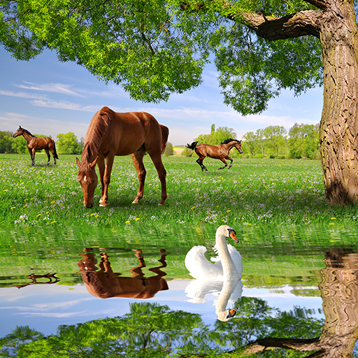 Horses Live Wallpapers -