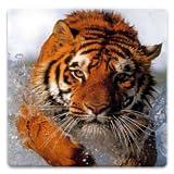 Animal Wallpapers!