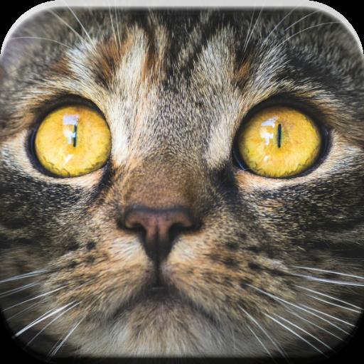 Kitty Katze-Spiele für Kinder kostenlos  miauen Jungen und Mädchen unter 6 Jahre alt: Sounds, puzzle & Matching-Spiele -