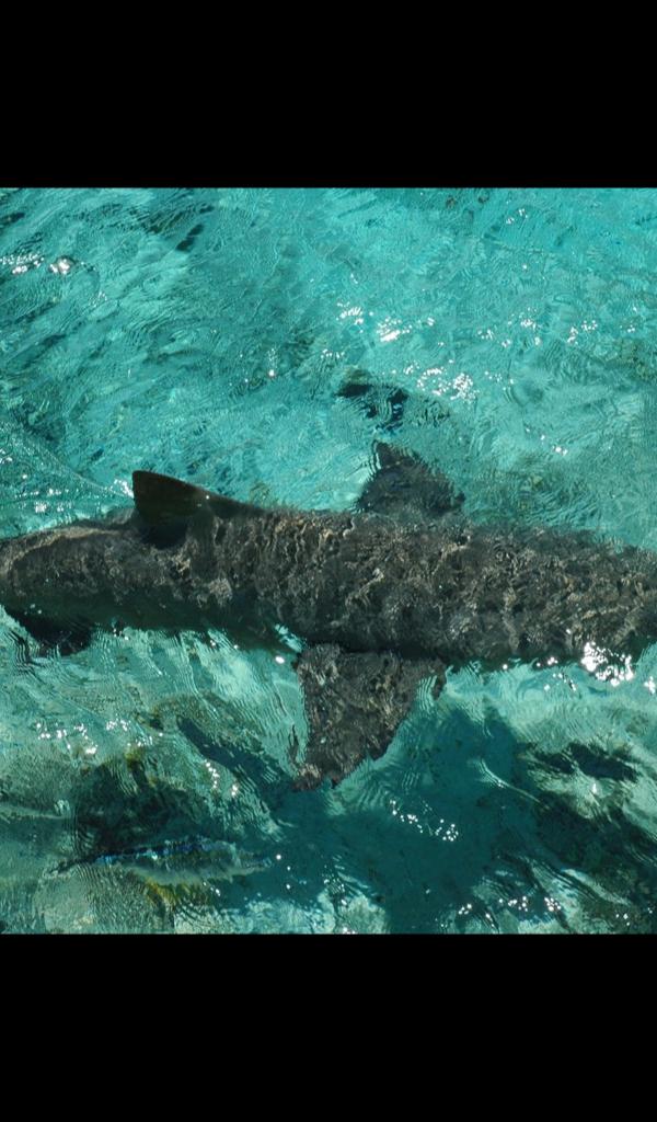 cute shark Wallpaper -- HD Wallpapers of cute sharks ...