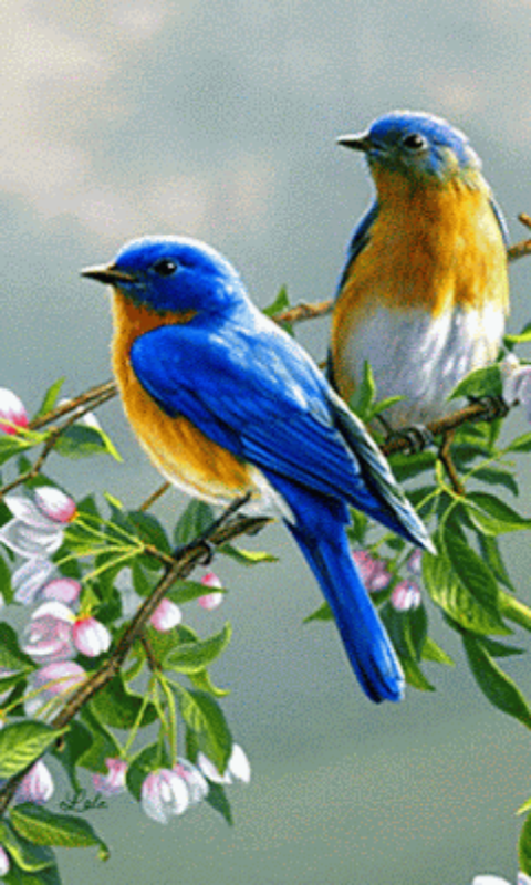 Animated Birds Gif Amazon Co Uk Appstore For Android