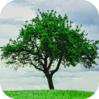 Tree Wallpapers