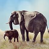 Elephant Sounds