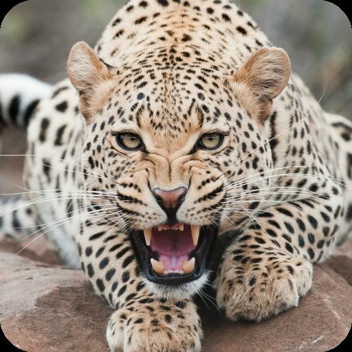 Eve Leopard (Leopard Live Wallpaper HD)