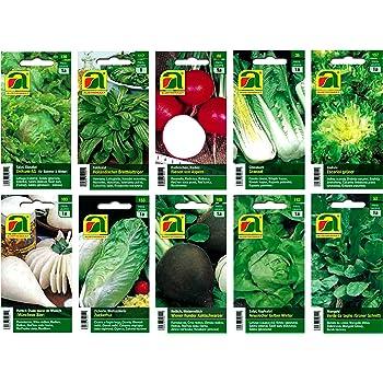 Appx 100 seeds Vegetable SeeKay Brussels Sprout Fillbasket
