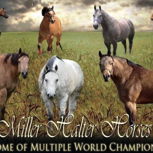 miller-halter-horses
