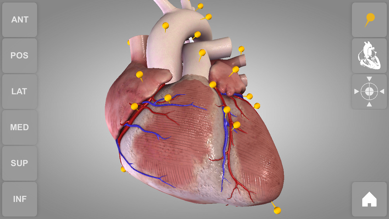 Herz - 3D Anatomie: Amazon.de: Apps für Android