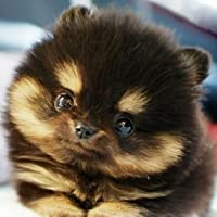 Baby Puppy Pictures