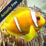 Fische im Korallenriff