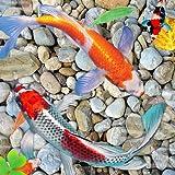 Live Fisch Wallpaper HD - 3D Wasser Thema