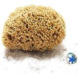 tom&pat® Éponge naturelle avec cordon & pendentif en verre, éponge de bain non blanchie de la Méditerranée, eponge lavable à
