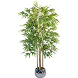 Maia Shop 1137 Bambú Cañas Naturales, Elaborados con los Mejores Materiales, Ideal para Decoración de hogar, Árbol, Planta Ar