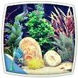 Tropical fish aquarium : colourful tank